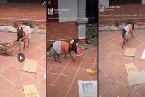 Clip chú chó thông minh có thể làm mọi thứ theo yêu cầu của chủ gây xôn xao