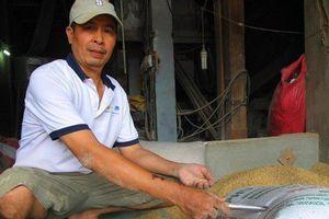 Vụ nhặt được vàng trong bao lúa ở Bình Định: Bí ẩn chủ nhân thực sự