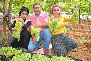 Thanh niên châu Âu tốt nghiệp đại học rồi về nông dân