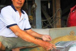 Vì sao chưa giao túi vàng nhặt được trong bao lúa cho công an?