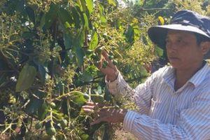 Ông Nguyễn Tấn Dũng tiết lộ cách ghép bơ Mỹ, lãi gần 1/3 tỷ