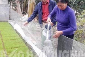 Kỹ sư công nghệ thông tin bỏ nghề đắm đuối với gạo ruộng rươi