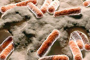 Phát hiện chủng vi khuẩn có thể ngăn ung thư
