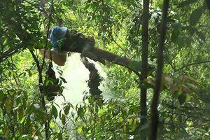 Hai bố con vào rừng lấy mật ong bị sát hại thương tâm