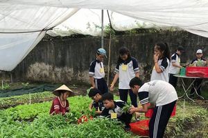 Nữ giảng viên đại học 8 năm trồng rau hữu cơ không lợi nhuận