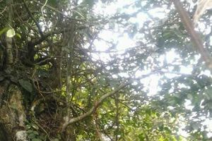 Phát hiện nghi can sát hại 2 bố con đi rừng lấy mật ong đã treo cổ tự tử
