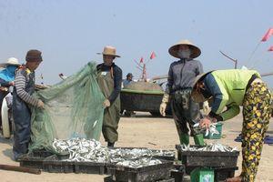 Hà Tĩnh: Được mùa cá trích, ngư dân tích cực ra khơi
