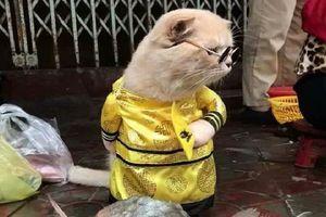 Chú mèo tên Chó đeo kính râm, mặc đồ 'chất lừ' ở chợ Hải Phòng gây sốt trang tin nước ngoài