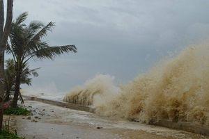 Hàn Quốc hỗ trợ 10.000 tấn gạo cho miền Trung bị ảnh hưởng bão số 12