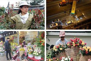 Tin tức Hà Nội 24h: Loạn giá hoa tươi; Làng hoa Tây Tựu trầm lắng