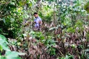 Vụ án hai bố con bị cắt cổ trong rừng: Nghi can đã tự tử
