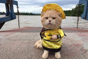 Chú mèo 'hoàng thượng' ở Hải Phòng lên trang tin nước ngoài