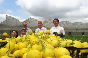 Tập trung tích tụ, hướng đến nông nghiệp công nghệ cao