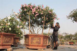 Thị trường quà tặng 8/3: Hoa hồng cổ giá trăm triệu hút khách