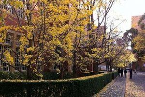 Lạc lối vào trường Đại học Melbourne, thu sang, đổ lá vàng khiến bao trái tim tan chảy