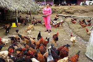 Nỗ lực của bà chủ trang trại từng là tội phạm mua bán người
