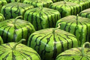 10 loại trái cây giá 'chát' nhất thế giới