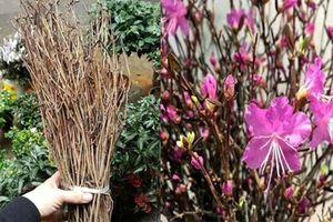 Hoa lạ đang 'hót' có độc hại?