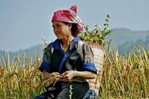 Cần cải thiện cuộc sống của phụ nữ nông thôn Việt Nam