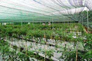 Công nghệ trồng rau sạch của Việt Nam tìm chỗ đứng tại Singapore