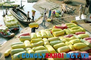 Đầu năm 2018: Vẫn nóng tình trạng lúa gạo lậu từ Campuchia