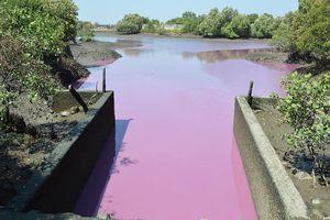 Bà Rịa-Vũng Tàu: 8.200 tỉ đồng xử lý ô nhiễm môi trường