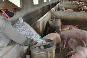 Giá heo hôm nay 13/3: Giá lợn sống Trung Quốc thấp nhất trong gần 4 năm, lợn khó đi biên