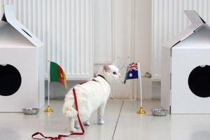 Nga chọn chú mèo điếc Achilles làm nhà tiên tri World Cup 2018