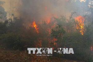 Vụ cháy 50 ha thông tại Gia Lai do phát dọn nương rẫy và đốt lửa