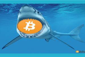 Giá bitcoin hôm nay (13/3): 'Trùm tin tức' dùng chính cảm xúc của mọi người để giúp 'cá mập' giao dịch