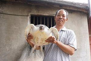 Nghệ An thả cá thể rùa nặng 5,5 kg về với biển
