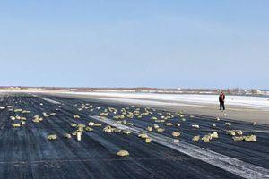 Bất ngờ đánh rơi nhiều tấn vàng, máy bay Nga hạ cánh khẩn cấp