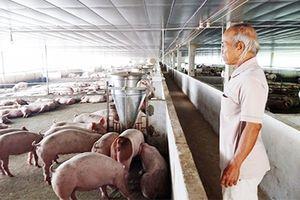 Phản hồi bài báo Cán bộ xã nghèo hùn vốn mở HTX chăn nuôi 'chui'