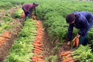 Ðẩy mạnh sản xuất nông nghiệp ứng dụng công nghệ cao