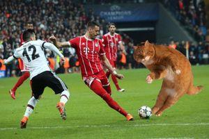 Trận đấu của Bayern bị gián đoạn vì một chú mèo