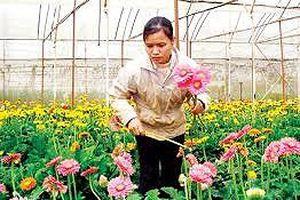 Cho vay gần 2.000 tỷ đồng phát triển nông nghiệp công nghệ cao
