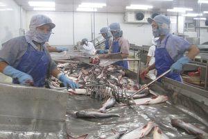 Cá tra vào Mỹ càng gặp khó khi thuế tăng cao
