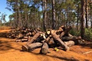 Khởi tố đối tượng hối lộ để phá rừng