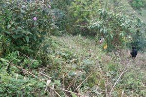 Tá hỏa phát hiện thi thể nam thanh niên trong rừng