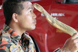 Luyện rắn vẫn bị rắn cắn chết