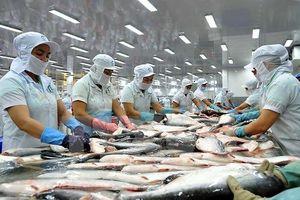 Cá tra Việt vào Mỹ chịu thuế chống bán phá giá cao kỷ lục