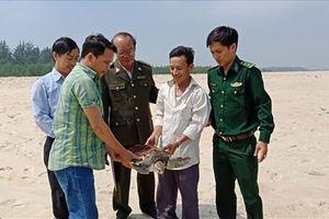 Cứu hộ và thả một cá thể rùa quý hiếm về biển