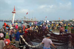 Ngư dân Lý Sơn liên tục đón lộc biển