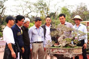 Hưng Yên: Triển lãm Cây cảnh nghệ thuật huyện Văn Giang 2018