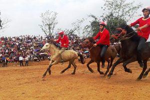 Tuyên Quang: Độc đáo giải đua ngựa, đấu ngựa xã Phù Lưu 2018