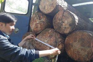 Bắt quả tang xe ô tô mang 2 biển kiểm soát vào rừng sâu chở gỗ lậu