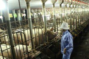 'Ông lớn' thực phẩm Dabaco 'ngậm đắng' vì giá lợn