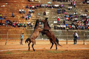 Hàm Yên, Tuyên Quang: Độc đáo Lễ hội chọi ngựa chợ Thụt
