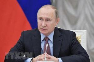 Kết quả thăm dò bầu cử Tổng thống Nga: Ông V. Putin giành chiến thắng áp đảo