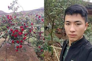 Chàng trai bị chửi rủa là kẻ trộm cây hồng đắt giá chính thức lên tiếng